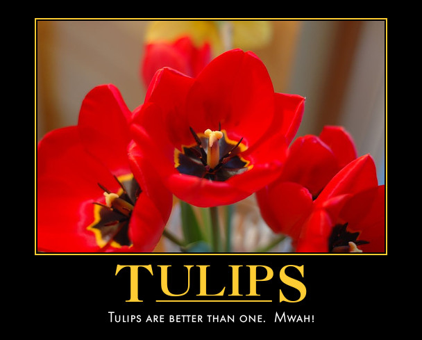 Tulips are better